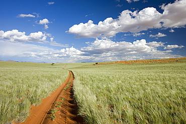 Namib Rand Nature Reserve, Namibia, Africa