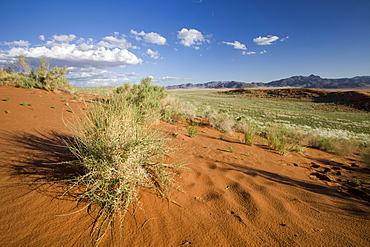 Wolvedans, Namib Rand Nature Reserve, Namibia, Africa