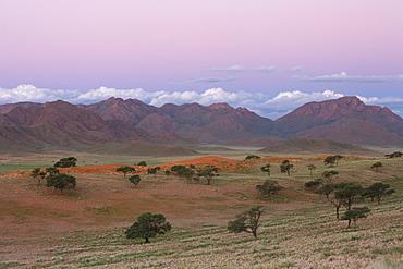 Sundowner, Wolvedans, Namib Rand Nature Reserve, Namibia, Africa