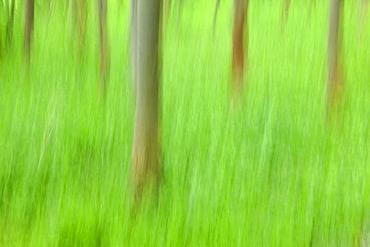 Trees, Forest, Bielefeld, NRW, Germany