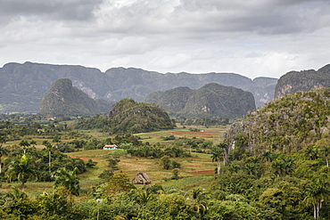 Mogotes in the Vinales Valley, UNESCO World Heritage Site, Pinar del Rio, Cuba, West Indies, Caribbean, Central America
