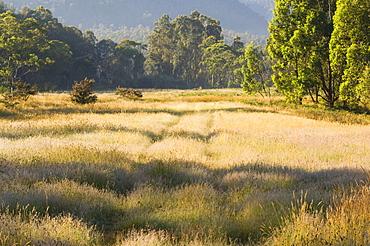Geehi, Kosciuszko National Park, New South Wales, Australia, Pacific