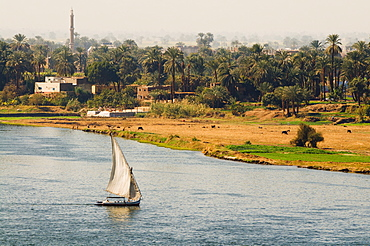 The River Nile, Luxor, Thebes, Egypt, North Africa, Africa