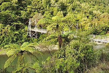 Tauranga historic bridge, Waioeka Gorge Scenic Reserve, Bay of Plenty, North Island, New Zealand, Pacific