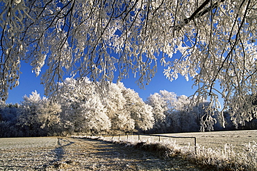 Trees covered with hoar frost, Bavaria, Germany, Europe