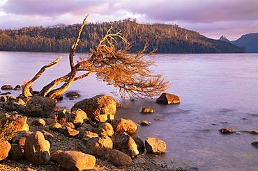 Lake St. Clair, Cradle Mountain-Lake St. Clair National Park, Tasmania, Australia, Pacific