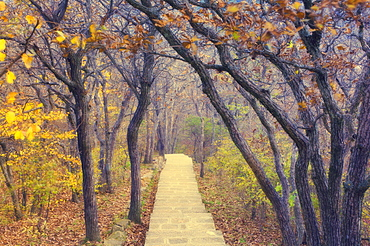 Footpath through mountain forest, Huang Shan (Yellow Mountain) (Mount Huangshan), UNESCO World Heritage Site, Anhui Province, China, Asia
