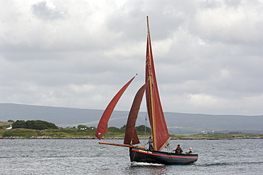 Galway hookers at Roundstone Regatta, Connemara, County Galway, Connacht, Republic of Ireland, Europe