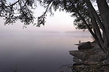 Misty morning, Malberg Lake, Boundary Waters Canoe Area Wilderness, Superior National Forest, Minnesota, United States of America, North America