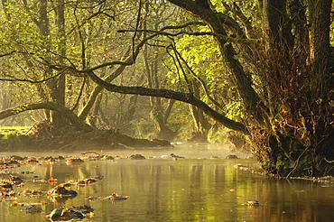 Autumn morning, Little Water of Fleet, Fleet Valley National Scenic Area, Dumfries and Galloway, Scotland, United Kingdom, Europe