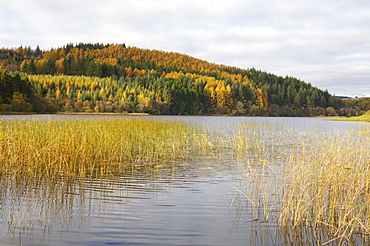 Woodhall Loch, near Laurieston, Dumfries and Galloway, Scotland, United Kingdom, Europe