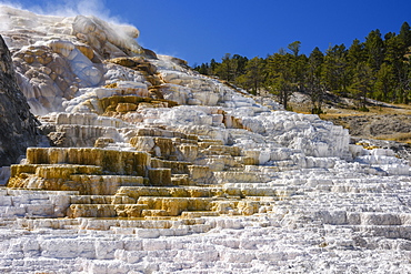 Palette Spring, Travertine Terraces, Mammoth Hot Springs, Yellowstone National Park, UNESCO World Heritage Site, Wyoming, United States of America, North America