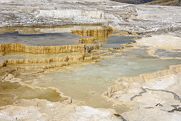 Canary Spring, Travertine Terraces, Mammoth Hot Springs, Yellowstone National Park, UNESCO World Heritage Site, Wyoming, United States of America, North America