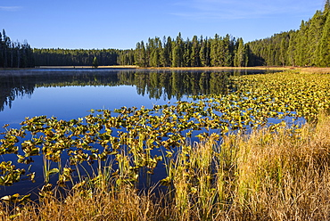 Ribbon Lake, Yellowstone National Park, UNESCO World Heritage Site, Wyoming, United States of America, North America