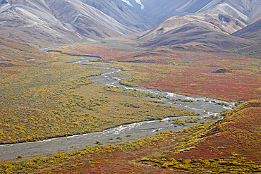 Braided river in the fall, Denali National Park and Preserve, Alaska, United States of America, North America