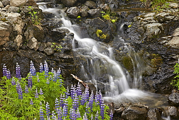 Cascade with lupines, Iceland, Polar Regions