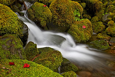 Cascade through moss-covered boulders, Olympic National Park, Washington State, United States of America, North America