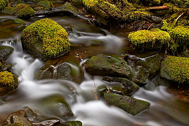 Cascades through moss-covered boulders, Olympic National Park, Washington State, United States of America, North America