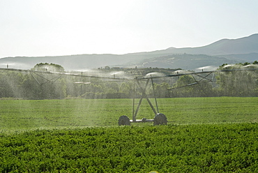 Irrigation in countryside near San Quirico d'Orcia, Siena, Tuscany, Italy, Europe