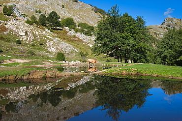 Lakes of Bozzone, Matanna Mountain (Monte Matanna), Apuan Alps (Alpi Apuane), Lucca Province, Tuscany, Italy, Europe