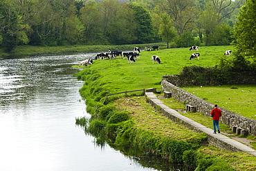 Countryside, County Kilkenny, Leinster, Republic of Ireland (Eire), Europe