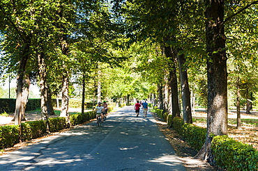 Park of Cascine (Parco delle Cascine), Florence (Firenze), Tuscany, Italy, Europe