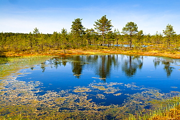 Viru Bog (Viru Raba) peat swamp, Lahemaa National Park, Harjumaa, Laane-Virumaa, Estonia, Baltic States, Europe