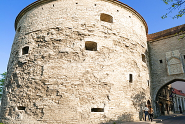Fat Margaret Tower, old city walls of the Old Town of Tallinn, UNESCO World Heritage Site, Estonia, Baltic States, Europe