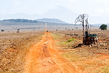 Track in the savannah, Taita Hills Wildlife Sanctuary, Kenya, East Africa, Africa