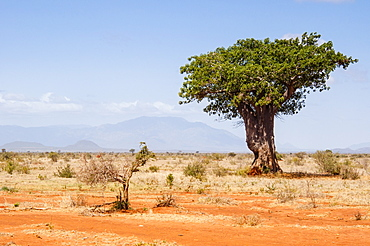 Track to Lake Jipe, Tsavo West National Park, East Africa, Africa