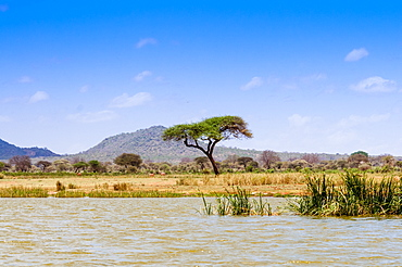 Shore of Lake Jipe, Tsavo West National Park, Kenya, East Africa, Africa