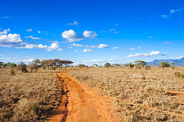 Trail in the Savannah, Taita Hills Wildlife Sanctuary, Kenya, East Africa, Africa