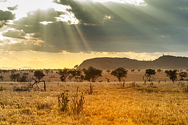 The Savannah, Taita Hills Wildlife Sanctuary, Kenya, East Africa, Africa