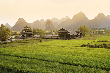 Rice fields, Yangshuo, Guangxu Province, China, Asia