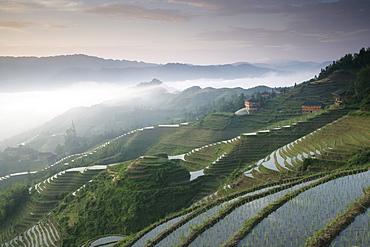 Sunrise, Longsheng terraced ricefields, Guangxi Province, China, Asia