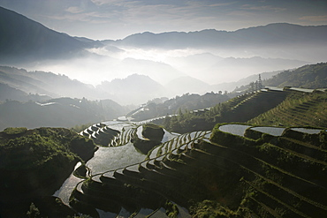 June sunrise, Longsheng terraced ricefields, Guangxi Province, China, Asia