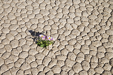 Racetrack Point, Death Valley National Park, California, United States of America, North America
