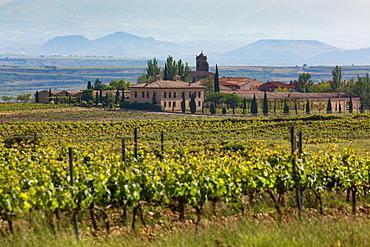 Idyllic vineyard in La Rioja, Spain, Europe