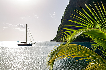 Yacht moored close to the base of Petit Piton, UNESCO World Heritage Site, near Sugar Beach with palm leaves in the foreground, St. Lucia, Windward Islands, West Indies Caribbean, Central America