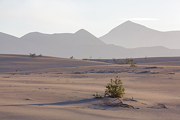 The dramatic Dunas de Corralejo in evening light with mountains beyond, on the volcanic island of Fuerteventura, Canary Islands, Spain, Europe