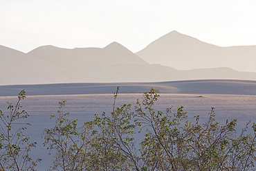The dramatic Dunas de Corralejo in evening light on the volcanic island of Fuerteventura with mountains beyond, Fuerteventura, Canary Islands, Spain, Europe