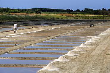 Collecting salt in salt pans, Ars-en-Re, Ile de Re, Charente Maritime, France, Europe