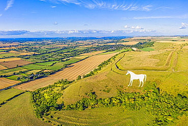 Aerial view of the famous White Horse below Bratton Camp, an Iron Age hillfort near Westbury, Wiltshire, England, United Kingdom, Europe