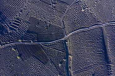 Aerial view over vineyards and black volcanic soil, La Geria, Lanzarote, Canary Islands, Spain, Atlantic, Europe