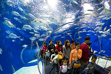 Tourists at the Shanghai Aquarium in Pudong District, Shanghai, China, Asia