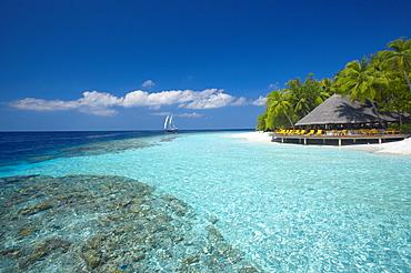 Terrace and tropical beach, The Maldives, Indian Ocean, Asia - 795-655