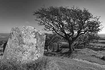 Tombstone and Hawthorn Tree in Brentor churchyard, Brentor, Dartmoor, Devon, England, United Kingdom, Europe