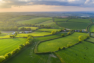 Verdant spring countryside in evening sunlight, Livaton, Devon, England, United Kingdom, Europe