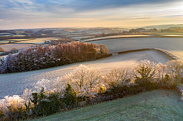 Rolling countryside at dawn on a frosty winter morning, Devon, England, United Kingdom, Europe