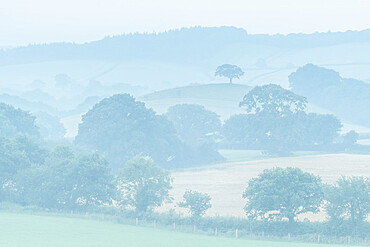 Rolling Devon countryside at dawn on a misty summer morning, Devon, England, United Kingdom, Europe